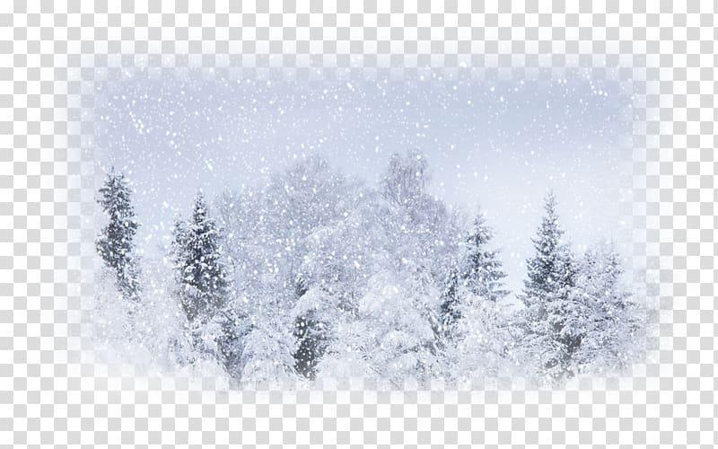 Snow Weather Winter storm Blizzard, snow transparent background PNG.
