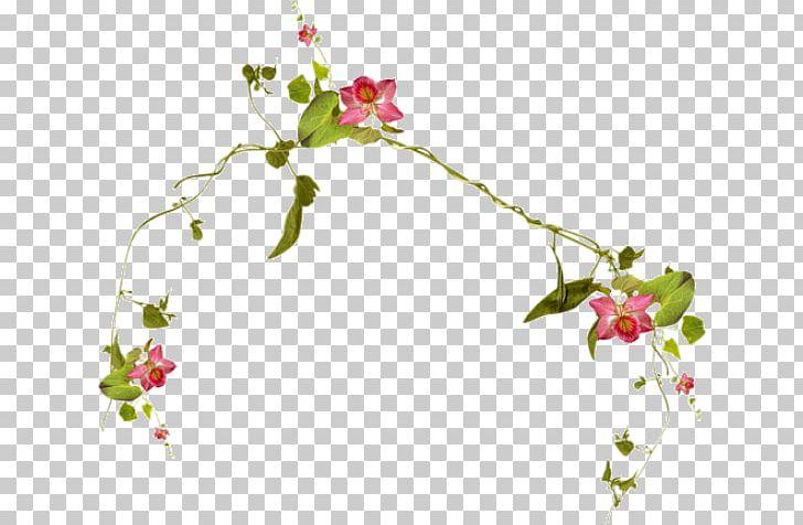 Liana Encapsulated PostScript PNG, Clipart, Blom, Blossom.