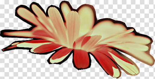 Yellow flower in blom transparent background PNG clipart.