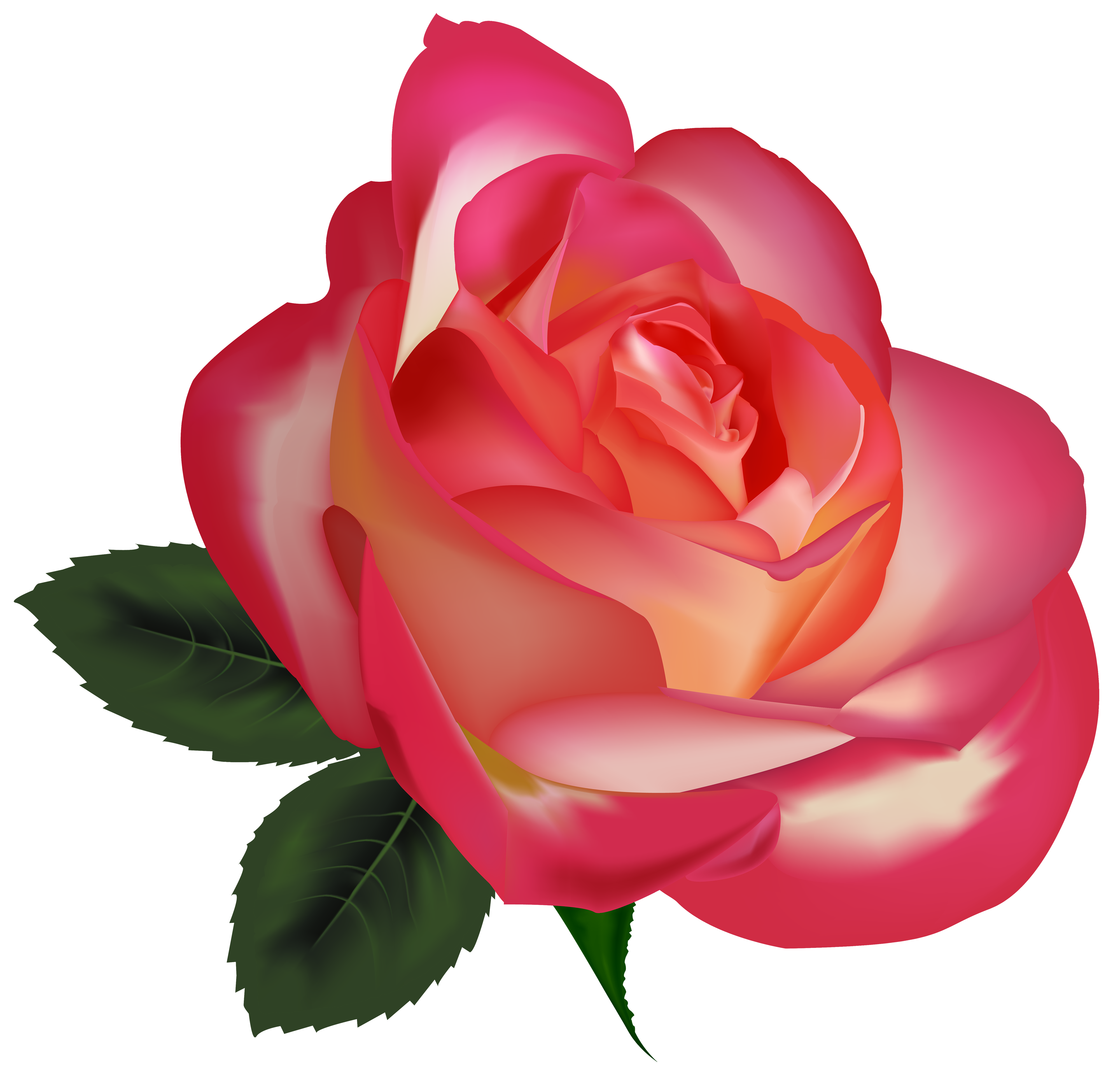 Beautiful Rose PNG Clipart Image.