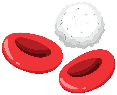 Red Blood Cell Clip Art, Vector Images & Illustrations.