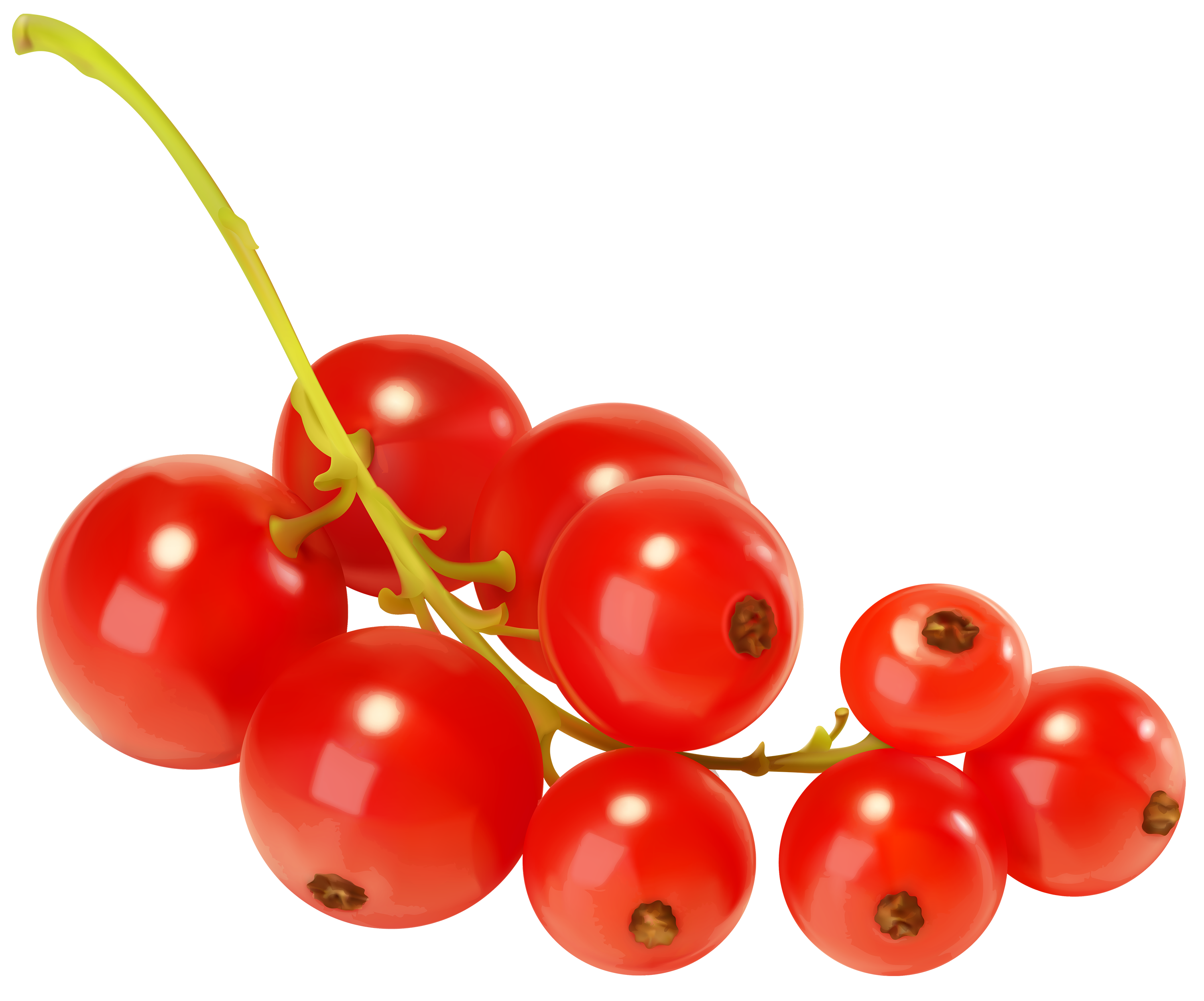 Red Currants PNG Clipart.