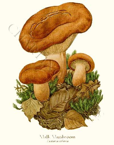1000+ images about Mushroom prints on Pinterest.