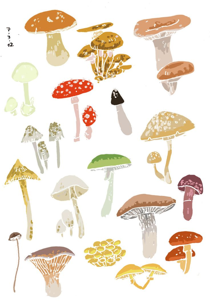 1000+ images about Mushroom Art & Illustration on Pinterest.