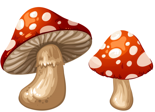 Mushrooms PNG Clip Art.