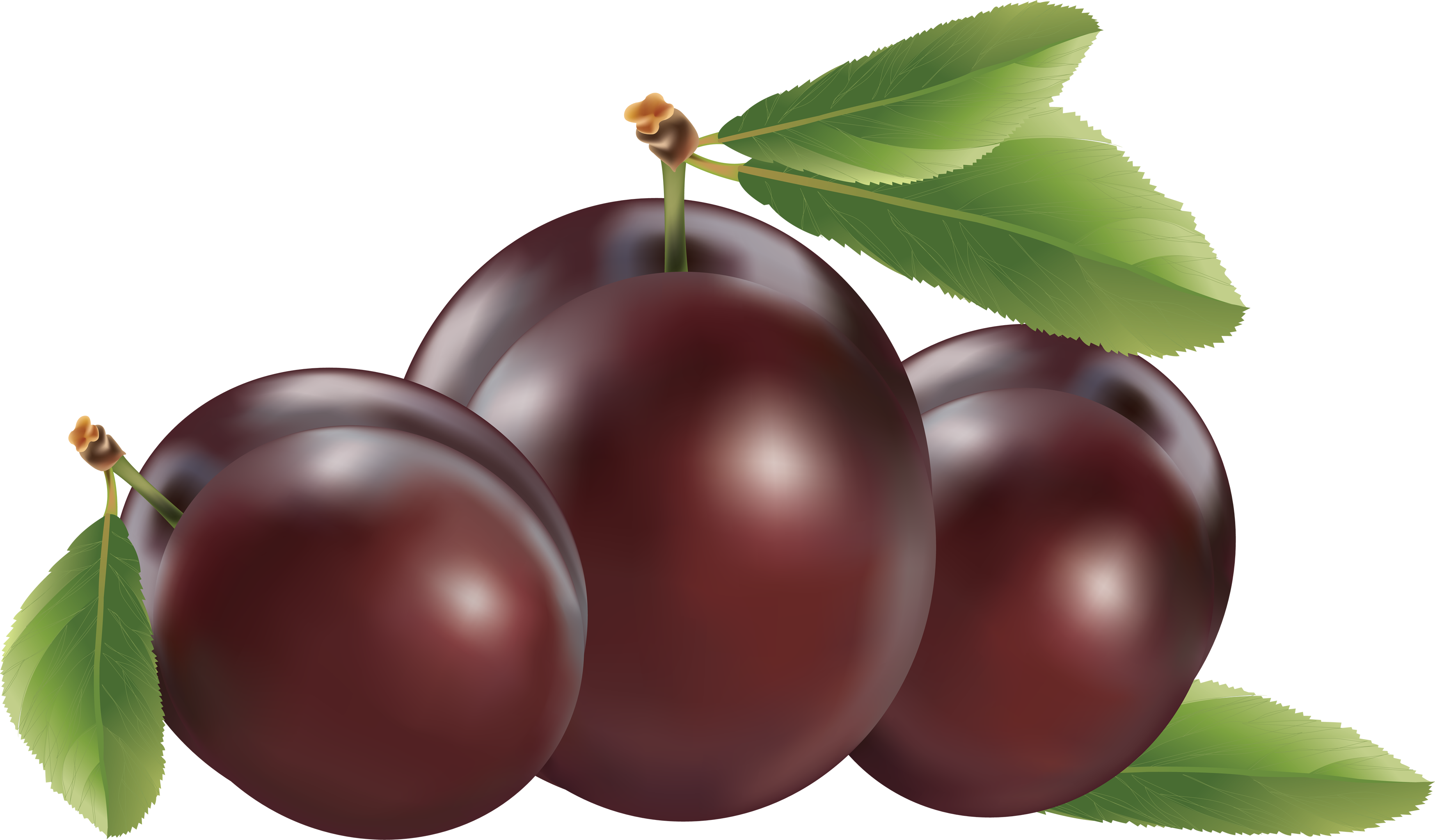 FRUIT for SLIMMING: 12 PLUMS DAILY MAKES MIRACLE FOR a slim figure.