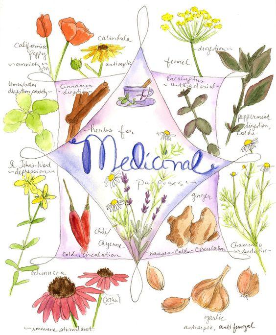 Medicinal Herb Chart.