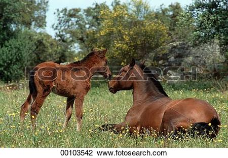 Stock Photo of blood, Juniors, animals, animal, Real, blooded.