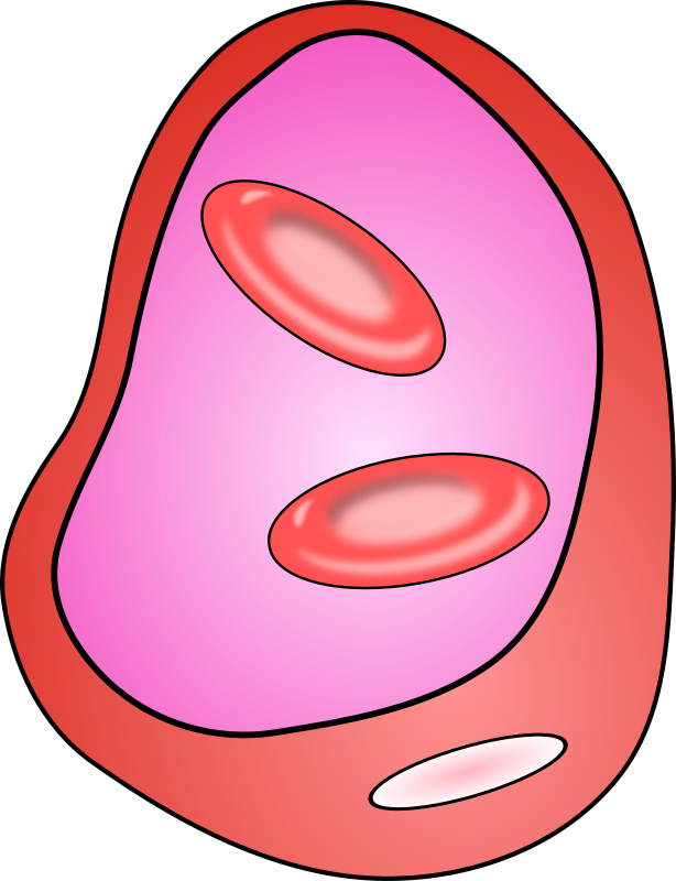 Blood Vessel Clipart.