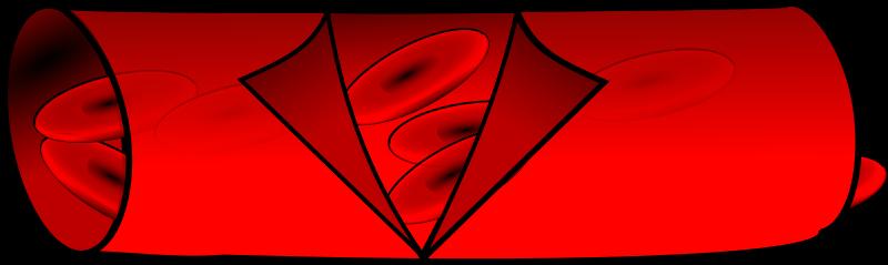 Blood vessels clipart.