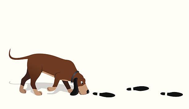 Best Bloodhound Illustrations, Royalty.