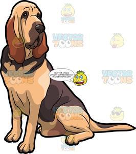 A Fierce Bloodhound Pet Dog.