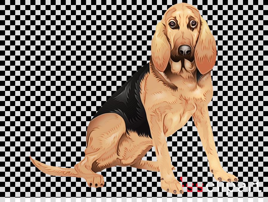 dog bloodhound schweizer laufhund coonhound snout clipart.