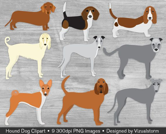 Hunting Dog Breeds Clipart Png Hounds Bloodhound Basset.