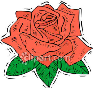 A_Fully_Bloomed_Red_Rose_Royalty_Free_Clipart_Picture_090412.