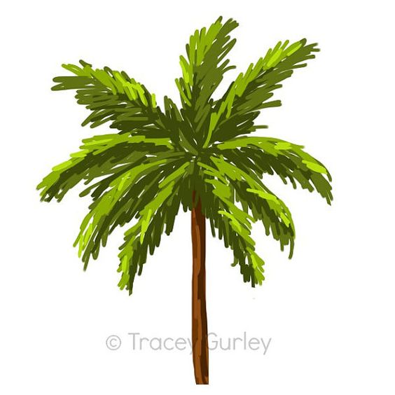 Blooming palm tree clipart #13