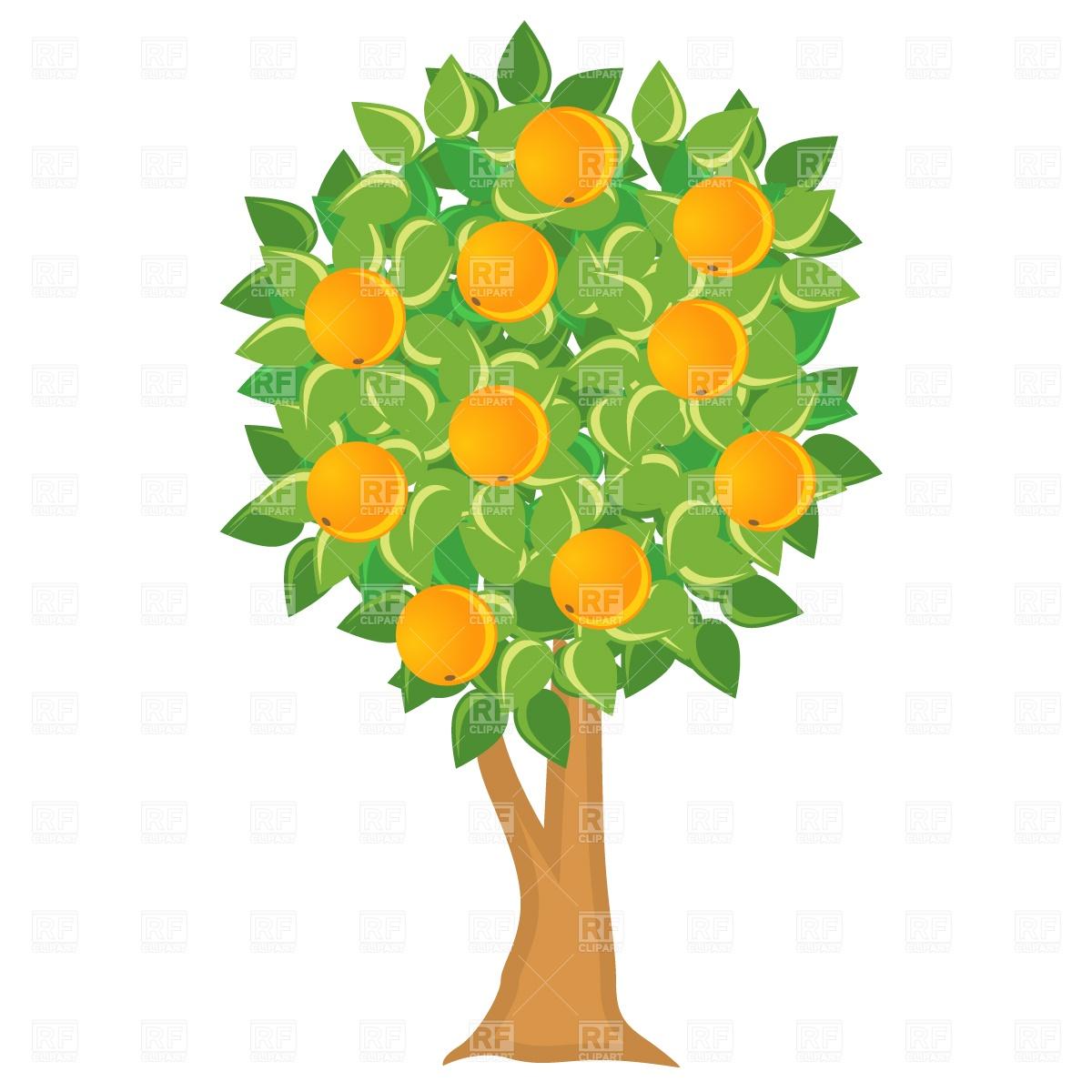 Orange tree in bloom clipart.