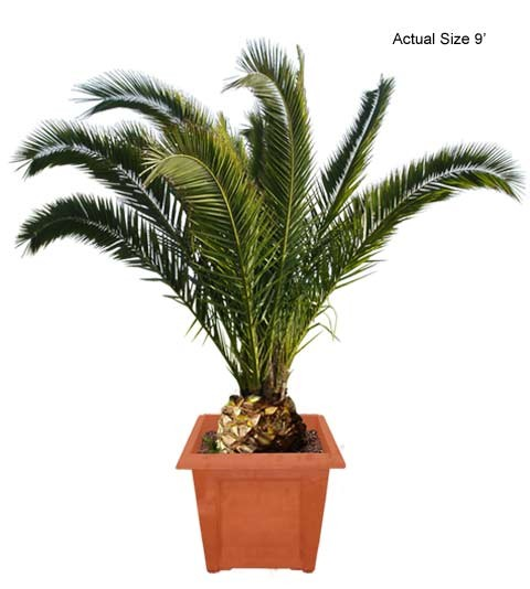 Blooming palm tree clipart #3