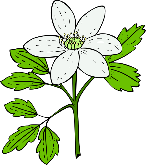 Flowering plants clipart.