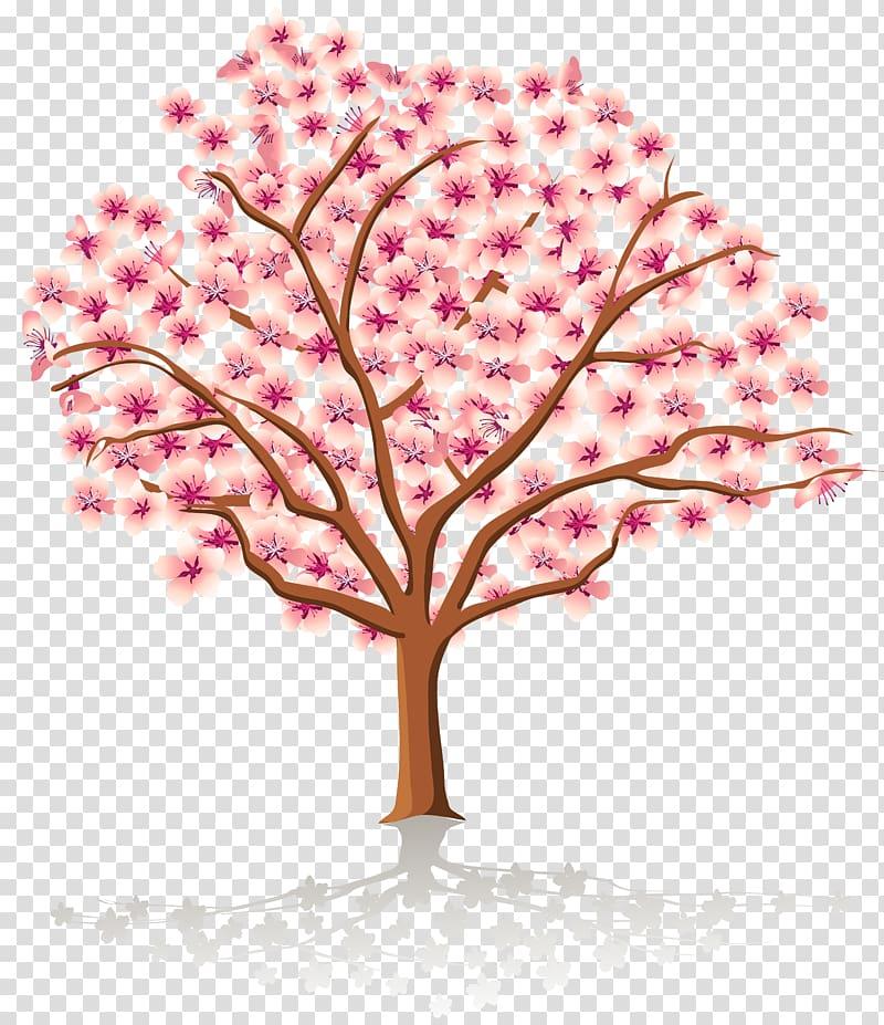 Spring Tree Blossom , Spring Tree , cherry blossom tree.