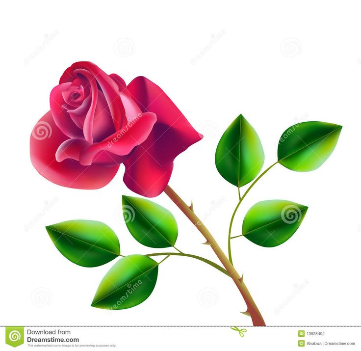blooming red rose clipart.