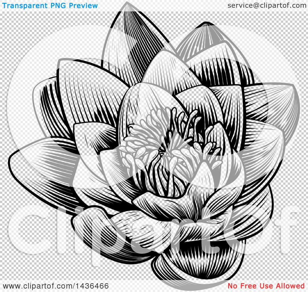 Clipart of a Vintage Black and White Engraved or Woodcut Blooming.