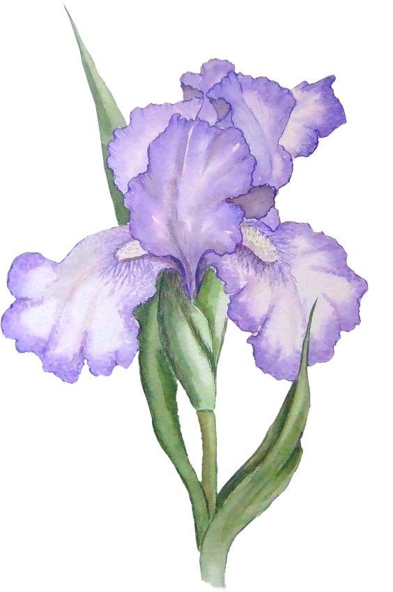 Bloompurple clipart #19