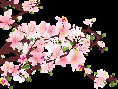 Cherry Blossom Border Clipart.