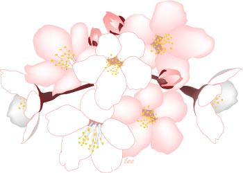 Cherry Blossom Flower Clip Art Cherry Blossom Flowers Clip Art.