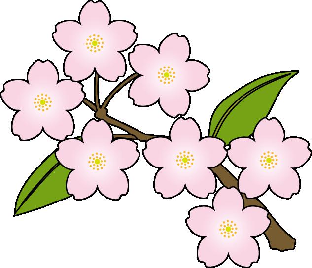 Sakura Flower Clipart Png.