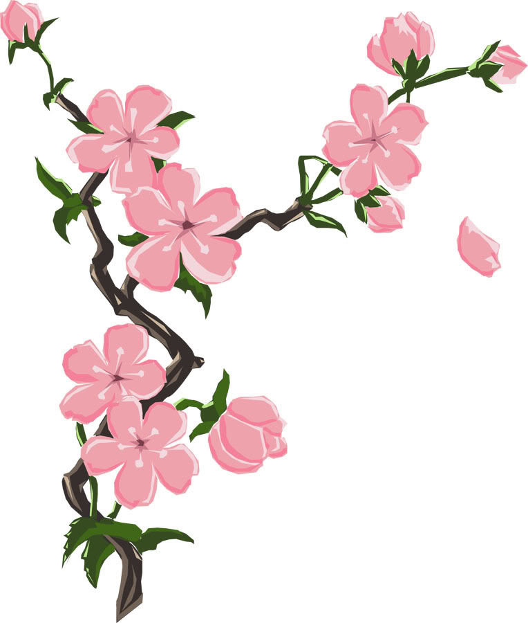Cherry Blossoms Clipart.