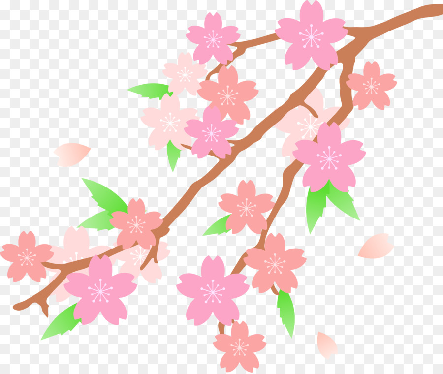 Cherry Blossom Cartoon clipart.