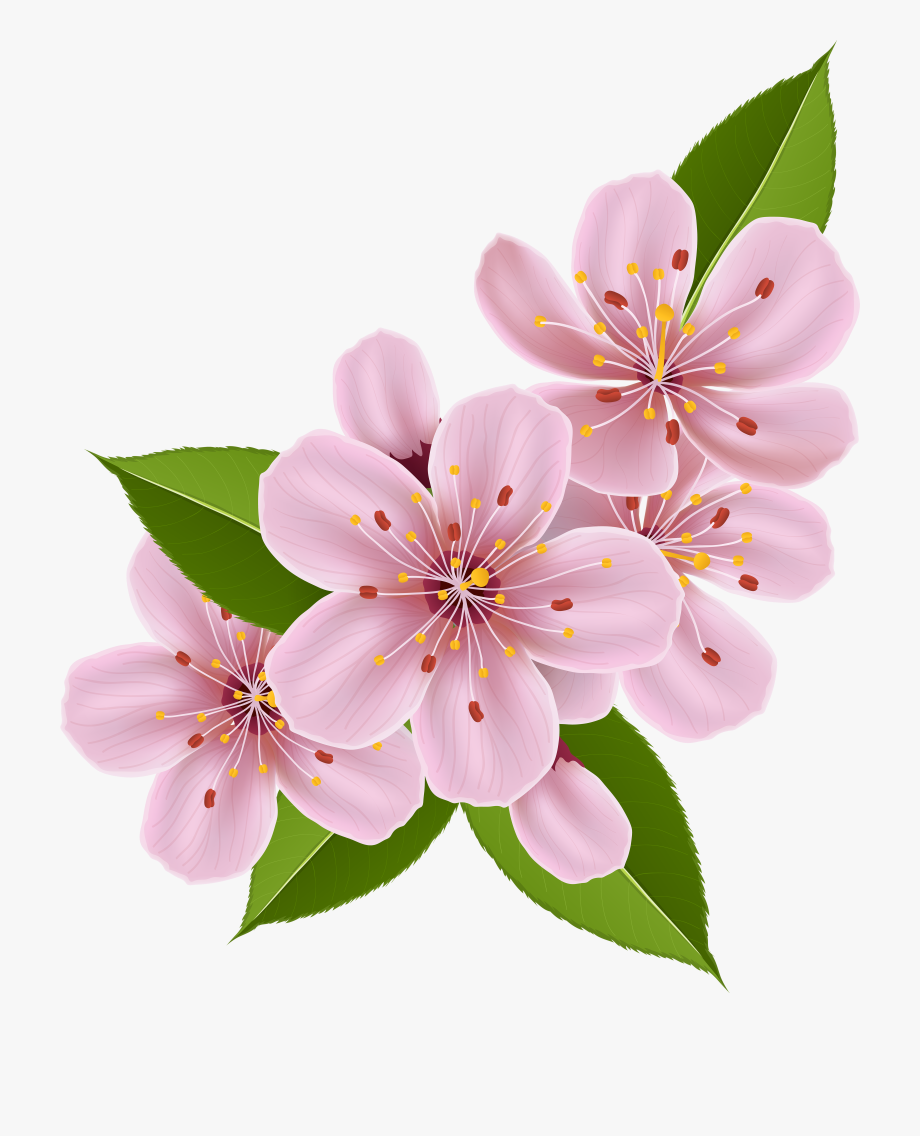 Folwe Clipart Cherry Blossom.