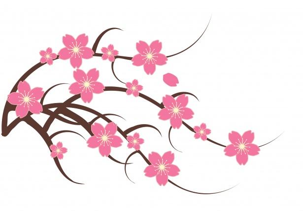 Cherry Blossom Clipart Illustration Free Stock Photo.