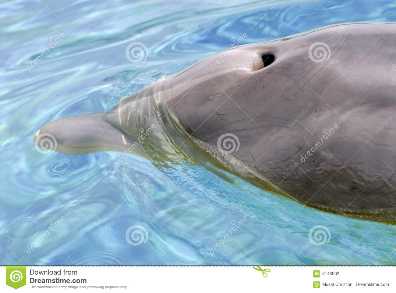 Blow Hole Of Dolphin Stock Photography.