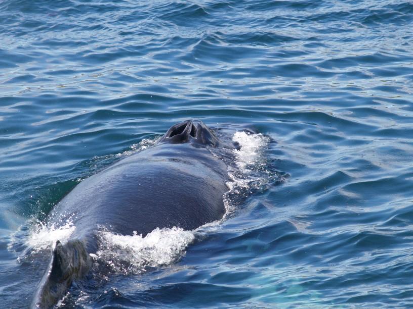 Similiar Whale Blowhole Keywords.