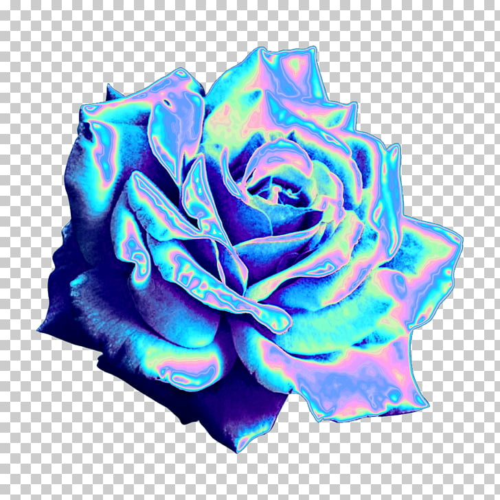 Garden roses Blue rose Sticker PicsArt Photo Studio , space.