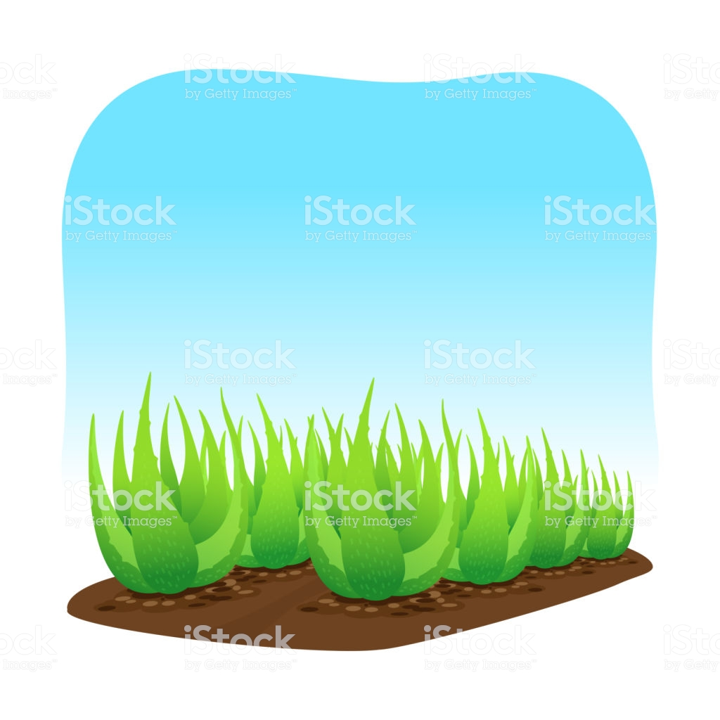 Aloe Vera Plant On Soil Isolated Over Blue Background Clip Art Of.