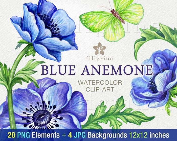 Clip Art Blue Anemone.