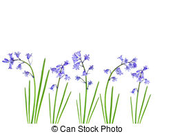 Bluebell Illustrations and Stock Art. 814 Bluebell illustration.
