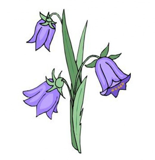 Bluebell Flower Clipart.