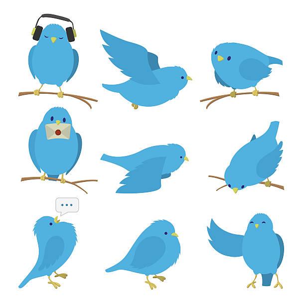Best Bluebird Illustrations, Royalty.