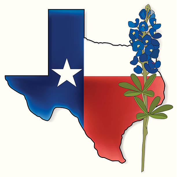 Texas Bluebonnet Clipart.
