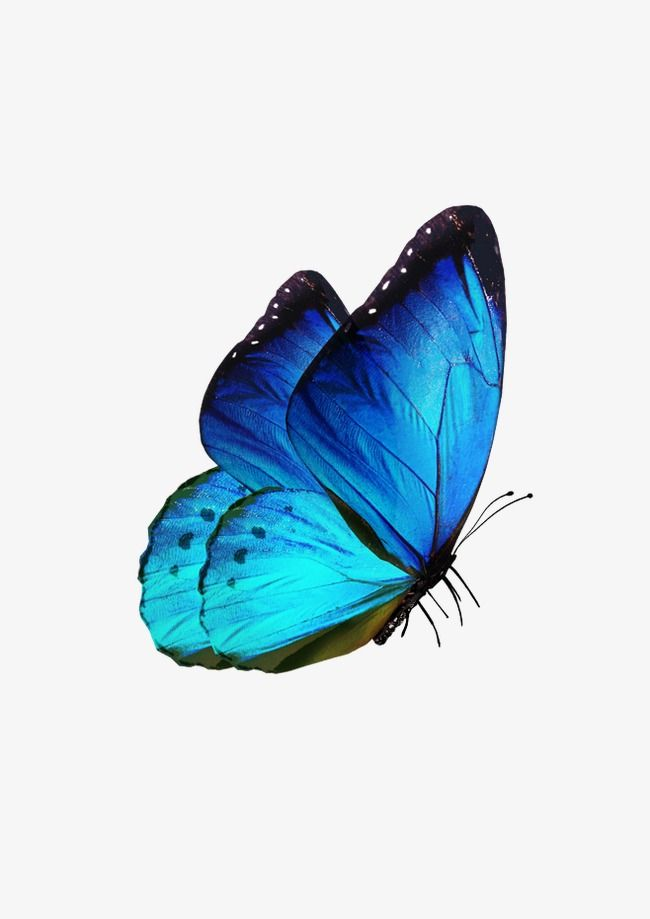 Butterfly, Butterfly Clipart, Blue, Fly PNG Transparent.