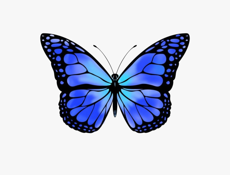Transparent Blue Butterfly Png.