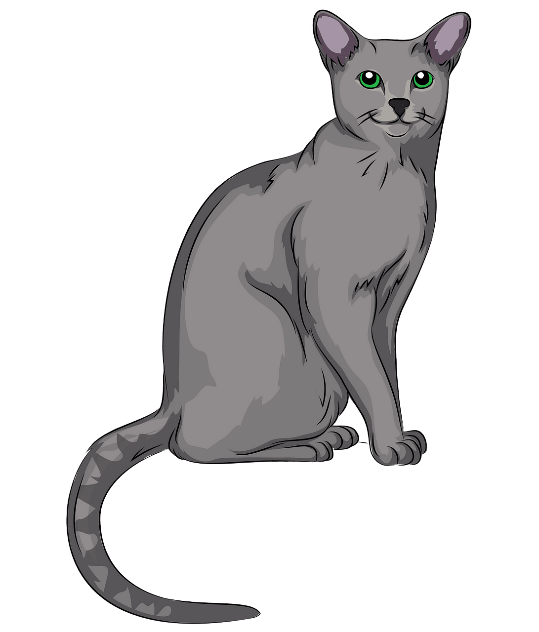 Russian Blue Cat clipart. Free download..