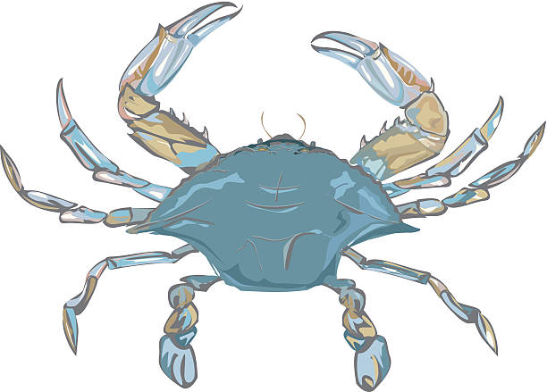 Best Blue Crab Illustrations, Royalty.