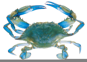 Blue Claw Crab Clipart.