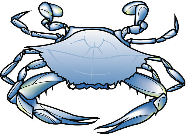 Best Blue Crabs Illustrations, Royalty.