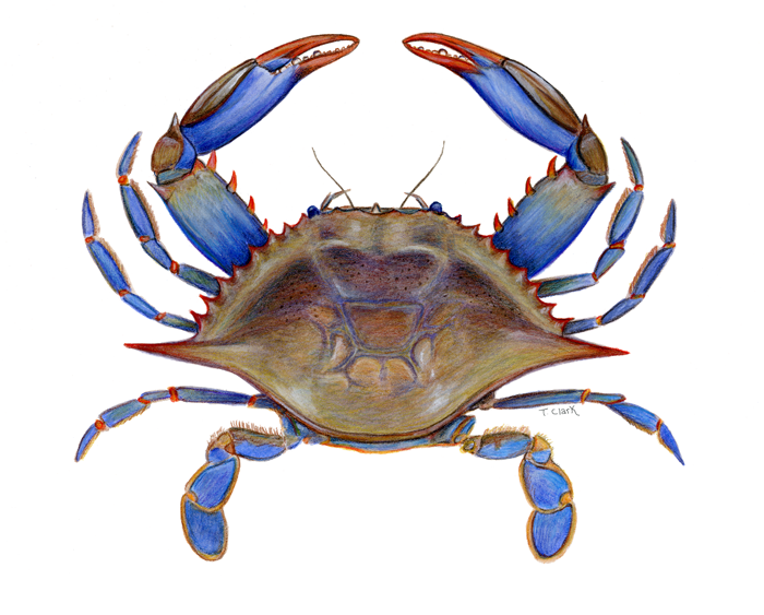 1000+ images about Comic Crabs on Pinterest.